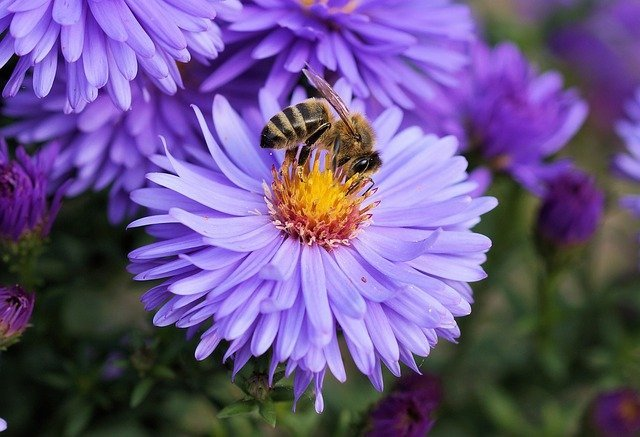 Arti Mimpi Disengat Lebah Tawon Menurut Primbon