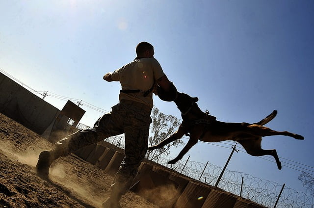 Arti Mimpi Dikejar Anjing Hitam dan Putih Menurut Primbon