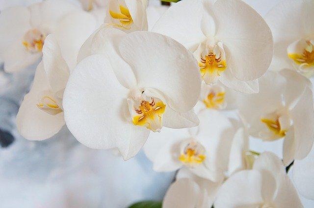 Arti mimpi melihat bunga anggrek