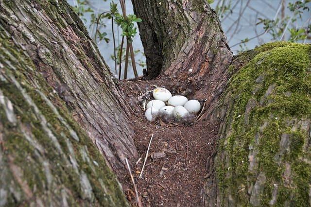 Arti Mimpi Telur Burung di Pohon Pertanda Tujuan Akan Tercapai