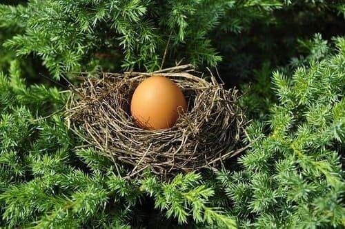 Arti Mimpi Melihat Telur Burung Pertanda Rejeki dan Penghasilan