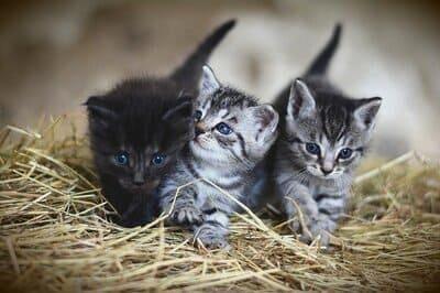 4 Rekomendasi Merk Makanan Kucing Murah Berkualitas
