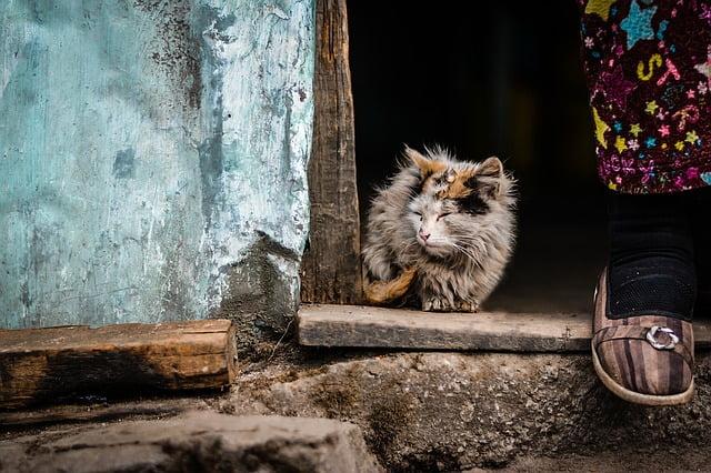 5 Penyakit Kucing yang Wajib Ketahui Pecinta Kucing