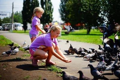 10 Rekomendasi Makanan Burung Parkit agar Burung Fit