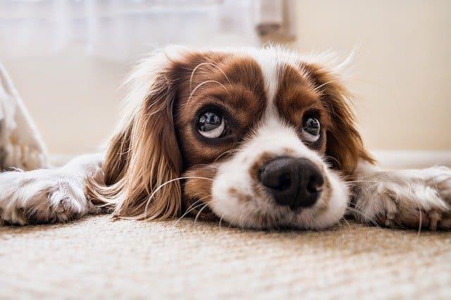 Arti Mimpi Melihat Anjing Peliharaan Pertanda Baik Atau Buruk?