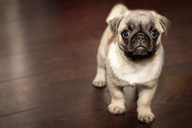 Arti Mimpi Memelihara Anjing Pertanda Baik Atau Buruk?